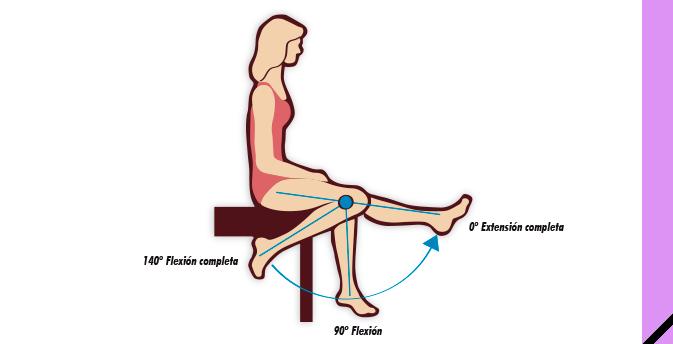 Flexion rodilla